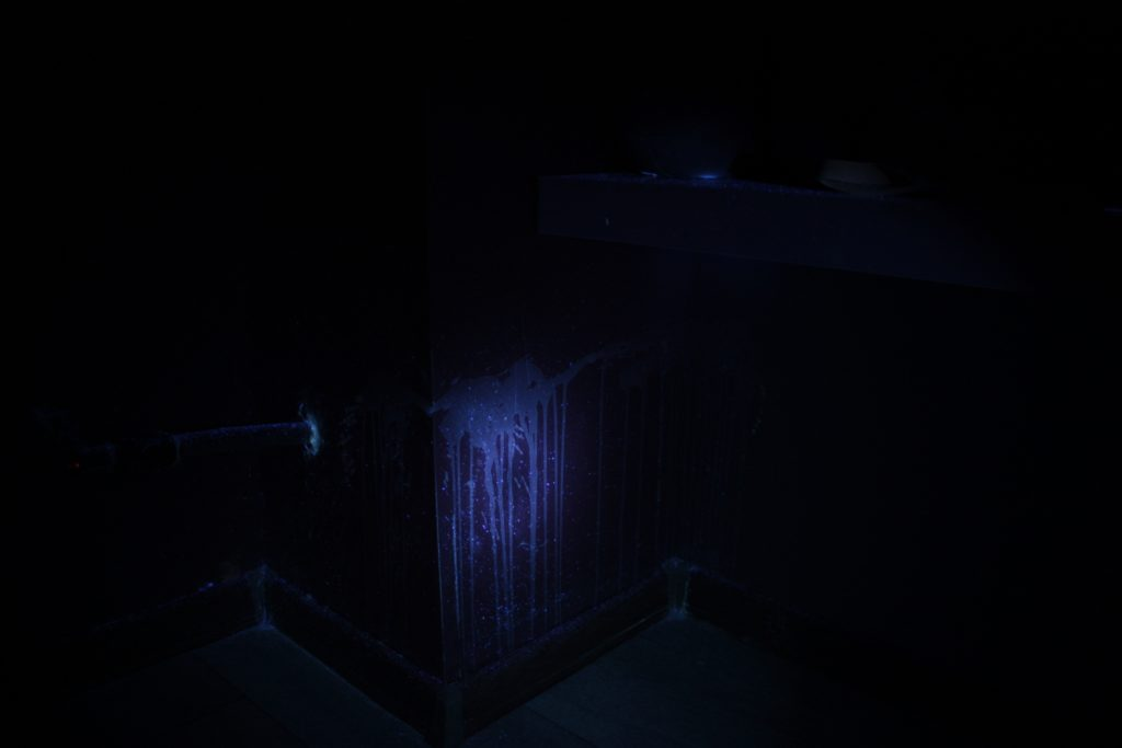 Ślady kociego moczu w świetle UV