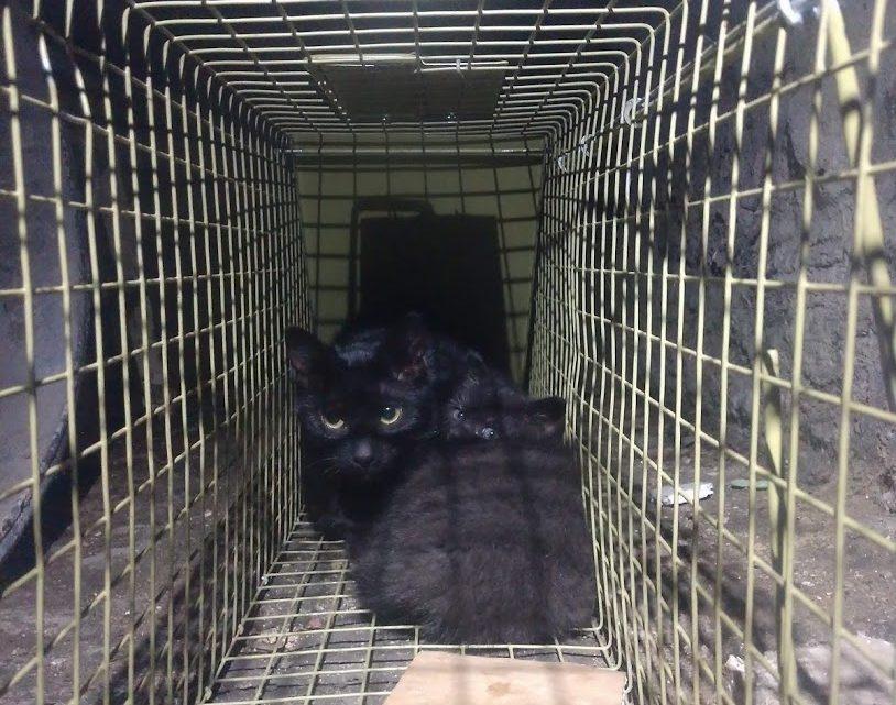 Łapanie kotów w piwnicy.